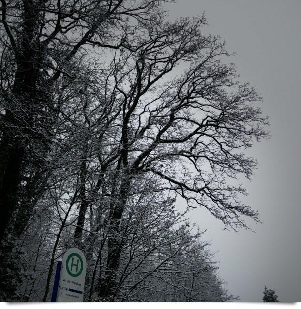 Schnee an der Waldlust